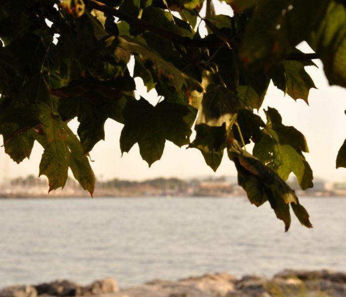 O ağacın altında…